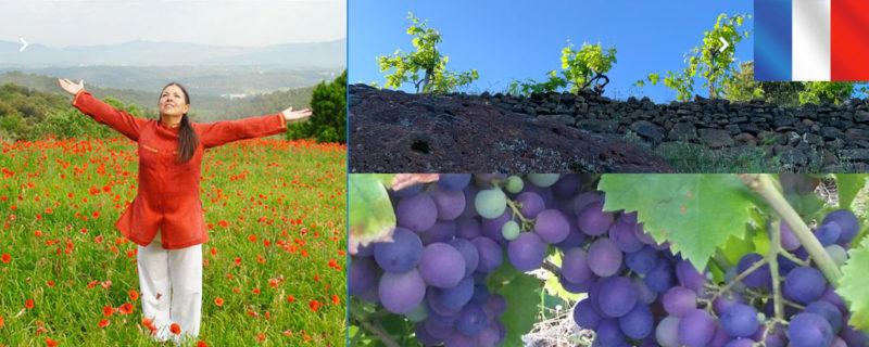 Tout savoir sur le cours de Montserrat spécial Vigne et Vignerons